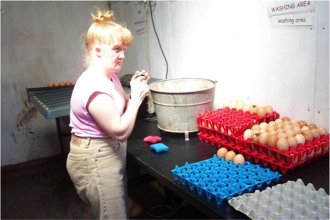 Gamelea Egg Grading