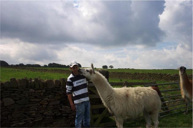 Gamelea Llama