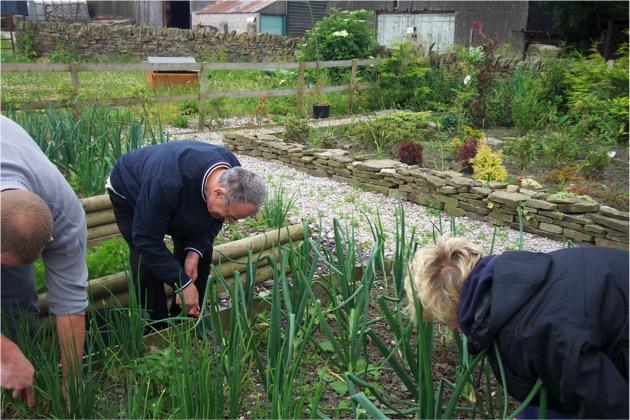 Gamelea Weeding Onions